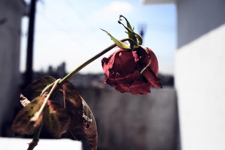 BLOG_Dani_fev2015_01(1)