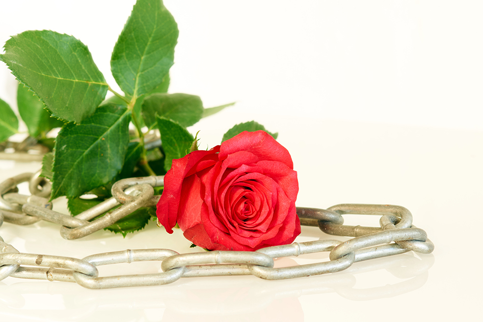 Red rose and metal chain - series of red roses